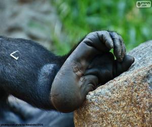 Puzzle Pied de gorille