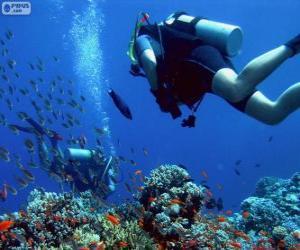Puzzle Plongée sous-marine
