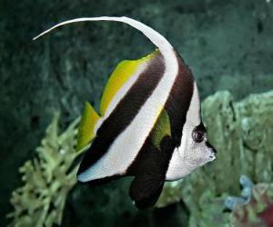 Puzzle Poisson du corail