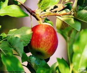 Puzzle Pomme dans l'arbre