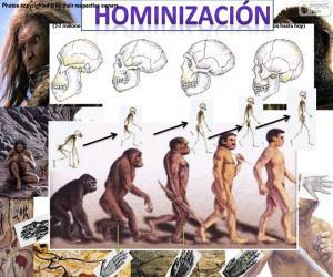Puzzle Processus d'hominisation