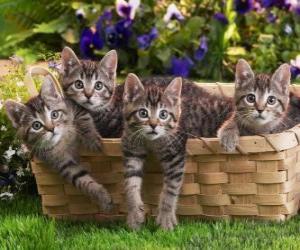 Puzzle Quatre chatons dans un panier