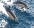 Puzzle ou casse-tête de deux dauphins sautant dans la mer