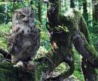 Hibou sur une branche