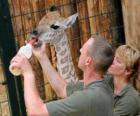 Gardiens de zoo ou de nourrir une girafe
