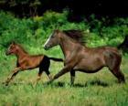 Cheval et poulain trot dans la prairie