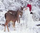 Deux cerfs à côté d'un bonhomme de neige