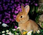 Lapin parmi les fleurs