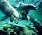 Groupe de dauphins nageant dans la mer