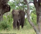 Elephant manger de l'herbe
