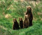 Famille de ours