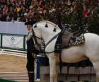 Elégant cheval avec ornement