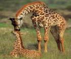 Famille jirafas