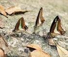 Papillons sur un tronc