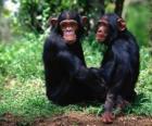 Deux singes assis sur le sol