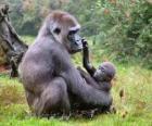 Famille de gorilles