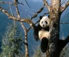 Panda sur un arbre