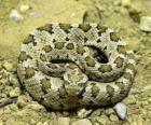 Serpent enroulé
