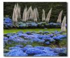 Hortensias et des fleurs exotiques