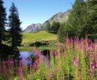 Un lac dans les fleurs de premier plan et de bureaux de haute montagne