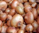 Oignons sont des bulbes comestibles