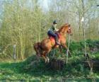 Cours technique équestre de la concurrence, teste la compréhension entre le cheval et le cavalier à travers différentes épreuves.
