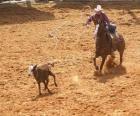 Cowboy en montant un cheval et en recueillant une bête avec le lasso