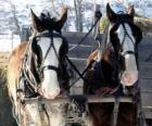 Deux chevaux tirant un chariot