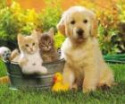 Chien avec deux chatons