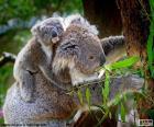 Koala grimpant à un arbre