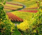 paysage d'automne dans le vignoble