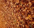 Les feuilles tombées sur le sol, une image typique de l'automne