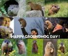 Le Jour de la marmotte est un jour férié qui est de célébrer aux Etats-Unis et au Canada le 2 Février