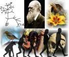 La Journée  Darwin , Charles Darwin est né le 12 février 1809. Arbre de Darwin, le premier plan de son théorie de l'évolution