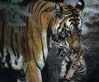 Tigre portant son bébé