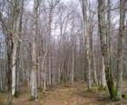 Forêt en hiver sans feuilles