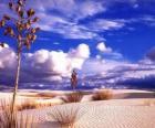 Paysage le désert
