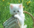 Adorable chaton blanc