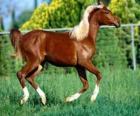 Élégant jeune cheval