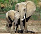 Maman contrôler son petit éléphant avec l'aide da trompe