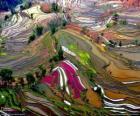 Les terrasses du Yunnan, Chine
