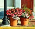 Fleurs dans un pot ou un pot de fleurs