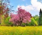 Arbre de la cerise au printemps