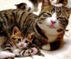 Maman Chat son votre chat bébé