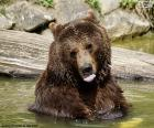 Gros ours dans l'eau