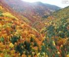 Forêt en couleurs d'automne