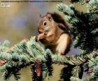 Écureuil roux sur un arbre