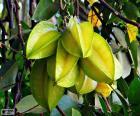 Carambole est un fruit exotique, appelé également poireau d'été