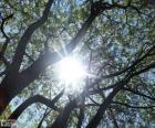 Branches et soleil
