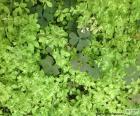 Mauvaises herbes